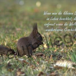 1 Eichhörnchen