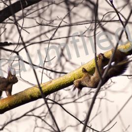2 Eichhörnchen