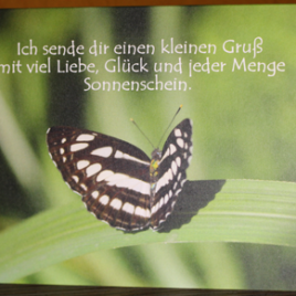 Kleiner Schmetterlingsgruß