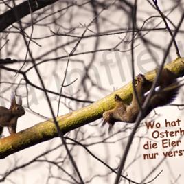 Oster-Eichhörnchen
