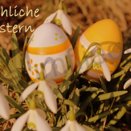 Oster-Schneeglöckchen
